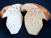 Червивый гриб