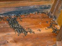Муравьи в бане