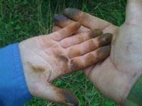 Руки после чистки маслят