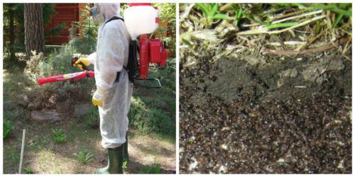 Борьба с муравьями химическими препаратами