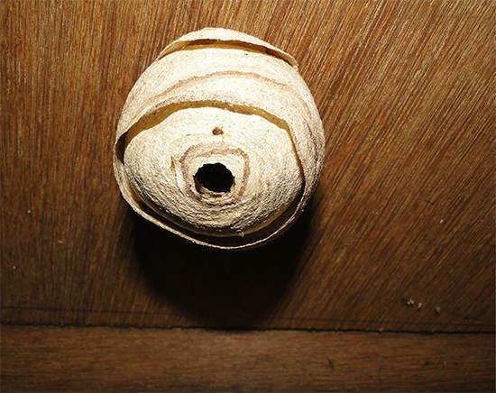 Осиное гнездо на потолке