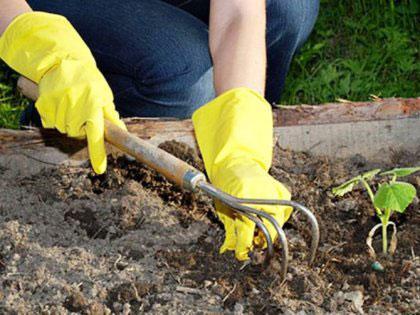 Работа в огороде в перчатках