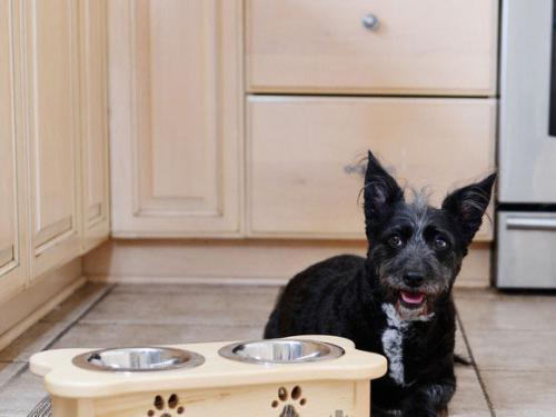 Собака рядом с мисками