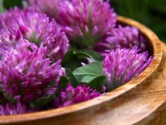 фиолетовые цветы в горшке