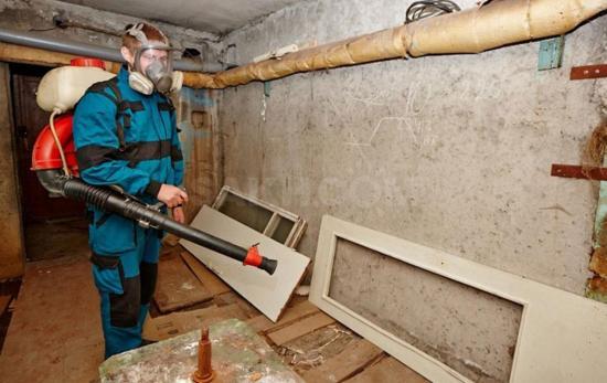 Уничтожение насекомых в подвале