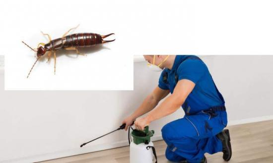 Обработка жилища от вредных насекомых