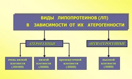 Виды липопротеидов