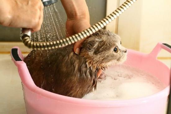 купают котенка